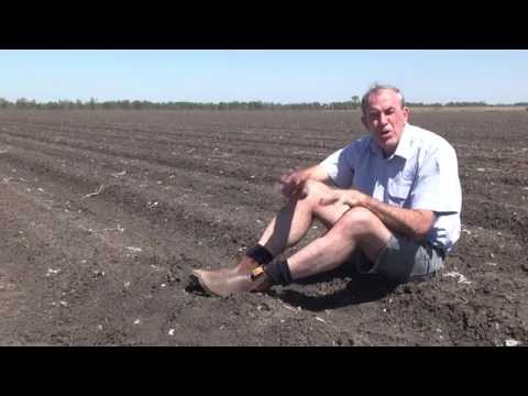 Planting tips for cotton