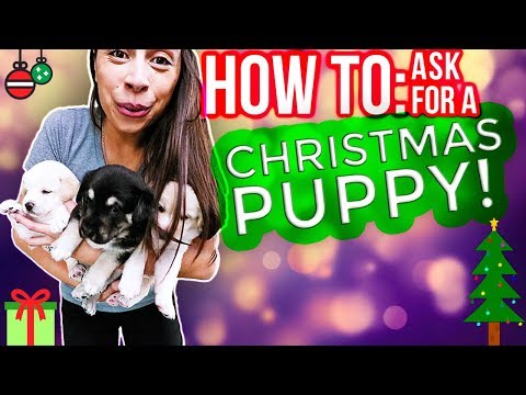Christmas Puppy: How To Get A YES From Your Parents!!!