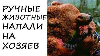Ручные #Животные, #НАПАВШИЕ на ЛЮДЕЙ