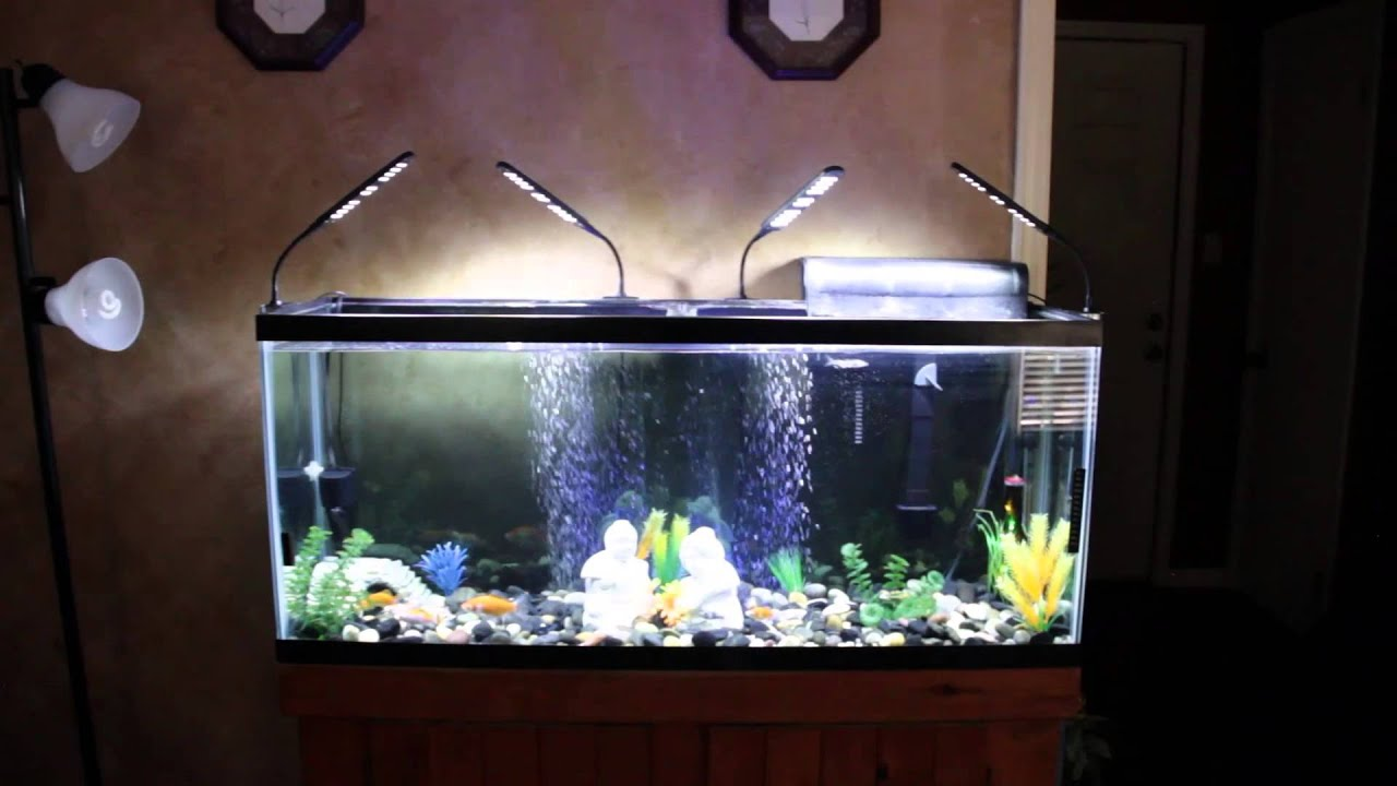 Fish aquarium for sale in karachi - Fish Aquarium For Sale In Karachi