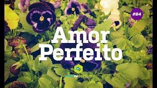 Amor perfeito planta