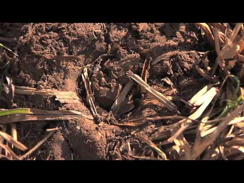 How do I get rid of moles in my yard? - YouTube
