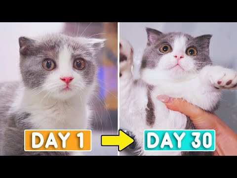 Day 1 to 30: Growing Up New Kitten Coco