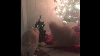 Cats Not A Fan Of Christmas Prank