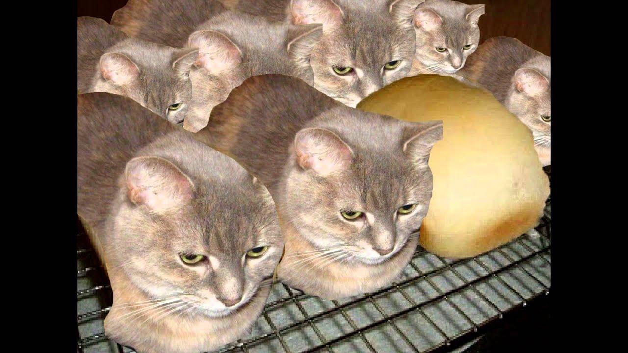Наверное вы подумали что я хлеб но я не хлеб я кот