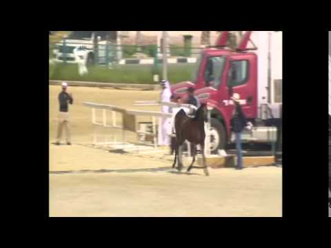 24th Qatar International Arabian Horse Show - Day 1 Morning Session