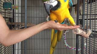Aggressive parrots: building relationships