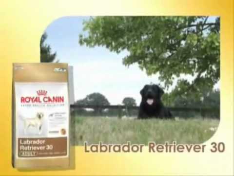 royal canin breed labrador retriever hundefutter youtube. Black Bedroom Furniture Sets. Home Design Ideas