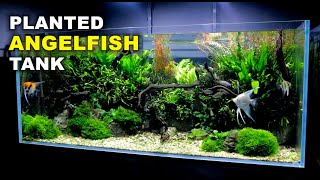 Aquascape Tutorial: Non co2 4ft Angelfish Aquarium (How To: Full Step By Step Guide, Planted Tank)