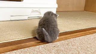 かわいい子猫のお尻を追っかけた結果
