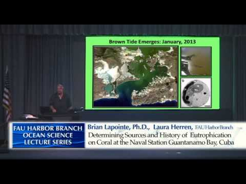 Brian LAPOINTE and Laura HERREN 2/11/15 Eutrophicaton of Coral Reefs