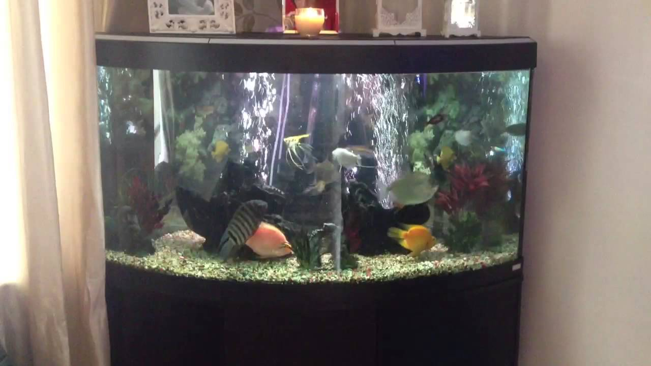 350 litre corner unit fish tank youtube for How much is a fish tank