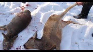 видео: В лесах Бурятии продолжается борьба с браконьерами