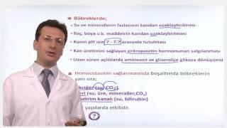 YGS-LYS BİYOLOJİ - Boşaltım Sistemleri 3