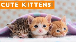 Cutest Kitten Video Compilation of 2017 | Funny Pet Videos