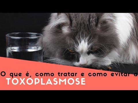 esporotricose x toxoplasmose