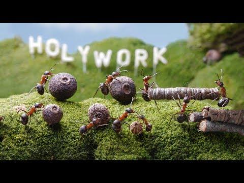 Как устроен муравейник видео