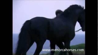 Caballo de Menorca, amanecer