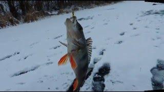Зимняя рыбалка. Ловля окуня на чёртика..