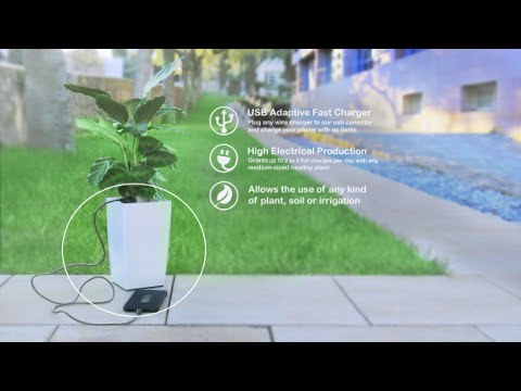 Charge Your Smartphone with A Plant