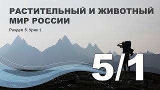 5/1 Растительный и животный мир России