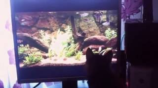 Cute cat vs рыбки! || Как занять своего кота)