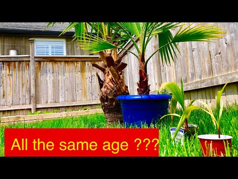 How To Make Palm Trees Grow Faster