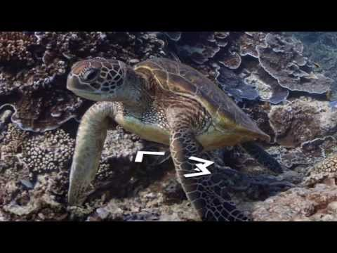 Global Ocean TV - Episode 7 - World Oceans Day
