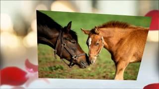 Foaling season has begun!