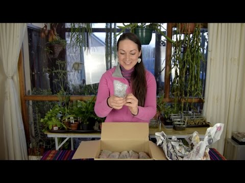 Succulent Plants Unboxing from Green Growers Glasgow - My Review