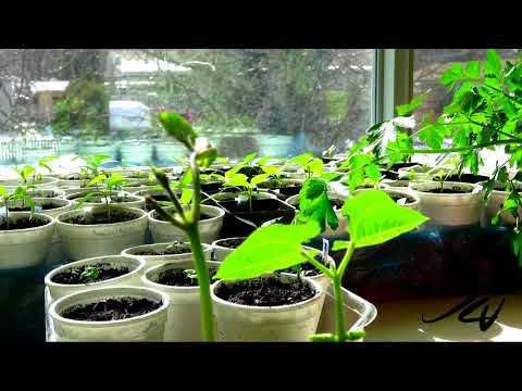Time Lapse 2019 - Random Plants  -  YouTube