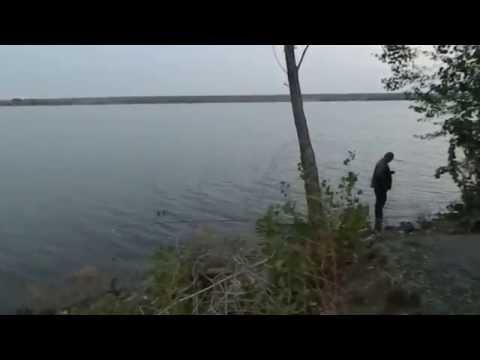 ловля сазана на ириклинском водохранилище