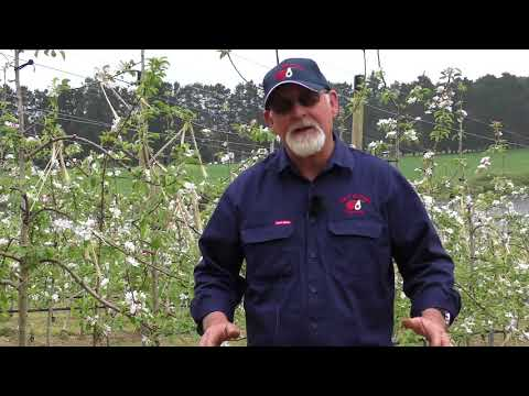 growing-apples-using-the-mafcot-system-with-trevor-fontanini
