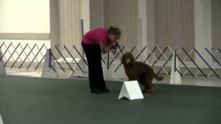 Cantope Poodles Rally Obedience Sophie Run#2.wmv