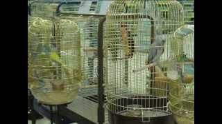 Все О Домашних Животных: Выставка Птиц В Донецке