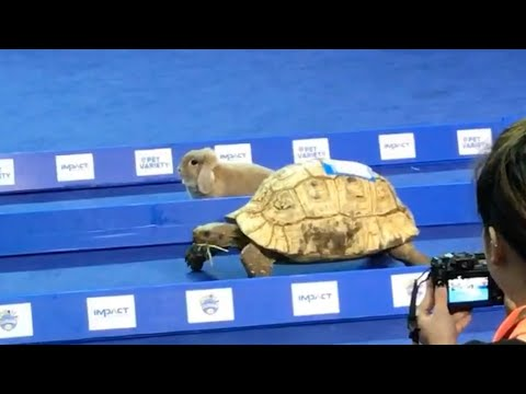 Tortoise vs. Hare