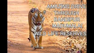 Bandipur, Madumalai Wild Life - Drive Thru Tiger Reserve in 4K