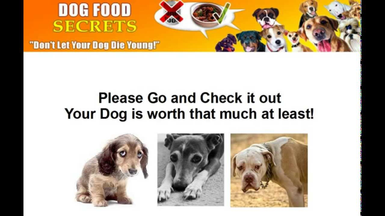 Vet Approved Dog Food