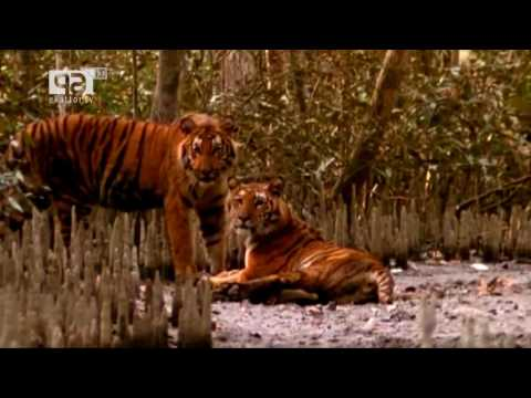 Eco Tourism Bangladesh বাংলাদেশে ইকো ট্যুরিজমের সম্ভাবনা