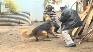 Mwangi Ana Miliki Mbwa 77