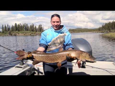 Dalton Trail Lodge   Yukon