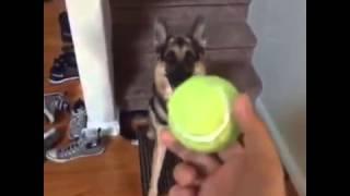 Duke do you want the Ball