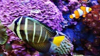 VLOG Рыбки #Немо и Дори ,Японские Карпы, Игуана.Nemo ,Carp,Giant Iguana