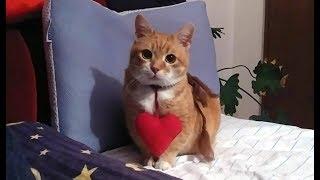 ハッピーバレンタイン。ハートのおもちゃと猫のメルティータイム