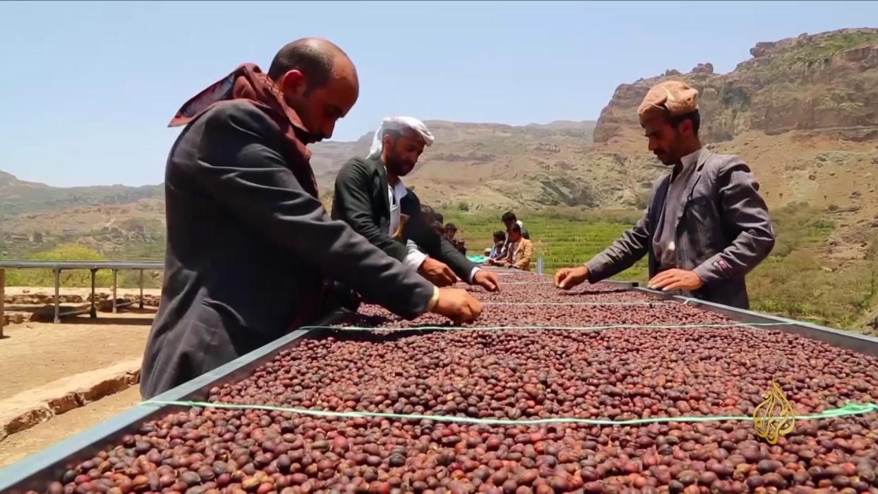 هذا الصباح البن من أقدم المنتجات الزراعية باليمن Youtube