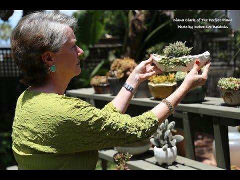 Perfect Succulent Plant-Pot Pairings