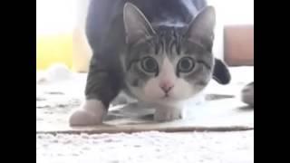 Wiggle Wiggle Wiggle cat