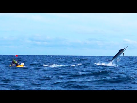 500-Pound Marlin Tows Kayak Fisherman 15 Miles Out To Sea | #FieldTrips Panama