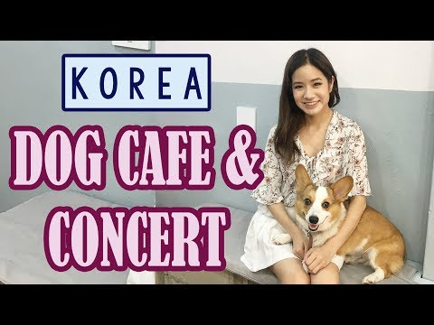 A Day in Seoul, Korea   Dog Cafe, Concert & Food ft. Sunnydahye
