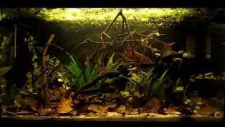 aquarium update - 10 september 2012